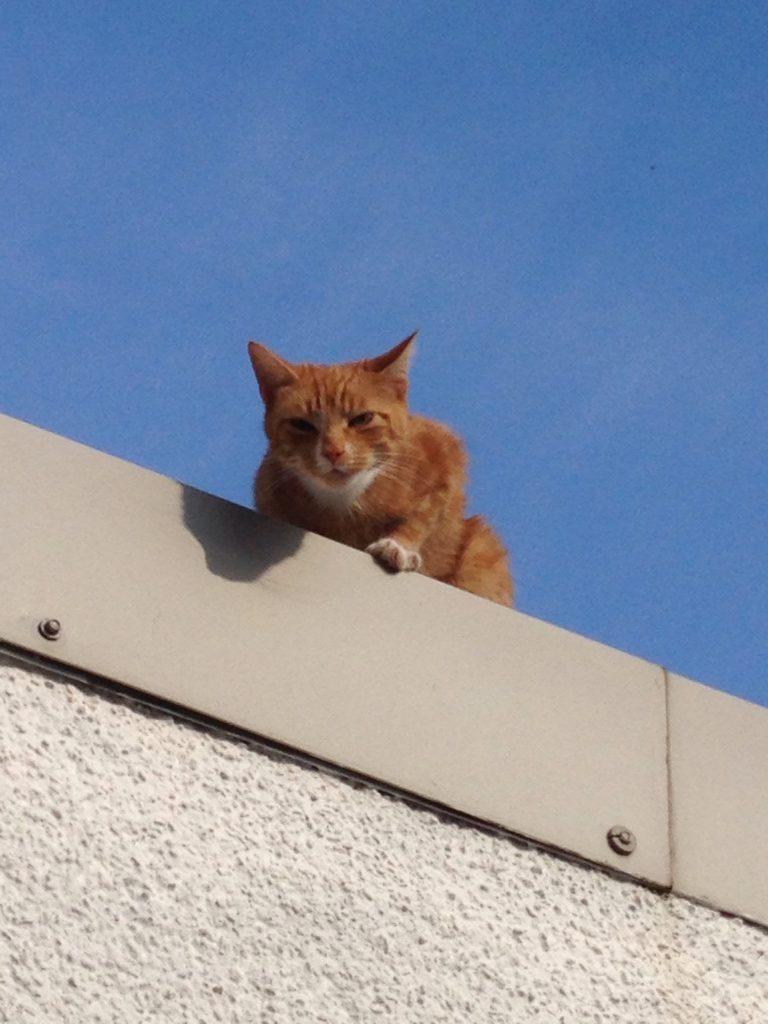 Evil-Shed-Cat